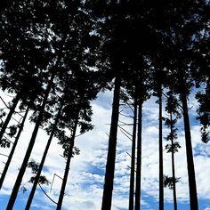 【tofu_fufu】さんのInstagramの写真をピンしています。《杉林から まるで伊勢型紙 #みんなのスカイウォーク #三島スカイウォーク #杉林 #杉 #樹海 #林 #カコソラ #ダレカニミセタイソラ #シルエット #伊勢型紙 #cool #お散歩》