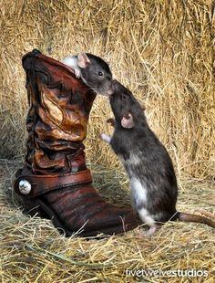 Can I come in? - www.facebook.com/512studios #pets #rats