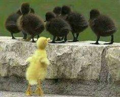 Duck, duck, yellow duck!