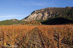 Vignes Automnales Diois drôme drome automne vin randonnee balade http://www.rando-drome.com/