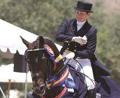 Welltex Fabric Soothes, Reduces Swelling | Rate My Horse PRO