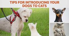This new study shows which dogs will best get along with cats without making them freaking out, and how to help Mittens adjust to a dog.