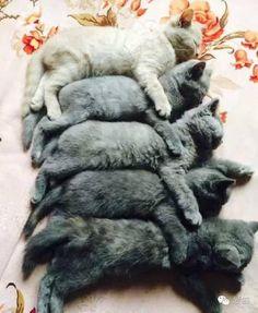 iPetGroup愛寵物 - 墨水用完了?別的貓咪都是生到墨水不夠用,這隻貓媽媽...卻把墨水集中在同一隻啦!