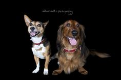 Animal Antics Photography. Animal Antics, Perth, Photographers, Corgi, Animals, Animaux, Corgis, Animal, Animales