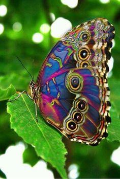 03/24/15 Proteja A Natureza