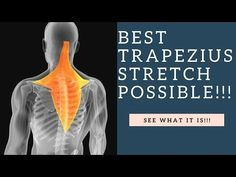 Back pain Relief Stretches - Back pain Location - - - What To Do Lower Back pain - Upper Back pain Men Muscle Stretches, Neck Exercises, Neck Stretches, Rheumatoid Arthritis Treatment, Psoas Muscle, Muscle Pain, Pnf Techniques, Traps Muscle, Massage