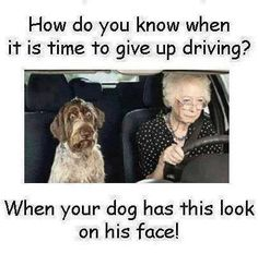 time to give up driving funny quotes quote lol funny quote funny quotes humor Meme Photo, Funny Cute, Really Funny, Haha, Poor Dog, Found Out, Funny Photos, I Laughed, Funny Animals