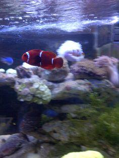 Another Nemo