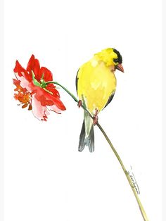 size: Stretched Canvas Print: Goldfinch And Red Flower 1 by Suren Nersisyan : Using advanced technology, we print the image directly onto canvas, stretch it onto support bars, and finish it with hand-painted edges and a protective coating. Watercolor Bird, Watercolor Paintings, Watercolor Techniques, Goldfinch, Painting Edges, Silk Painting, Stretched Canvas Prints, Bird Art, Red Flowers
