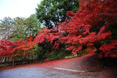 高画質 光明寺 紅葉 写真 綺麗 京都