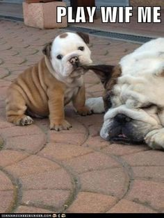 I Has A Hotdog - Page 7 - Loldogs n Cute Puppies - funny dog pictures - Cheezburger