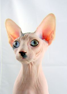 This would be the only cat I would ever own!