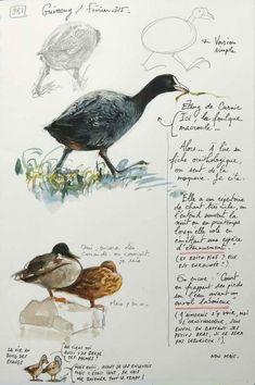 A Britain by the Contours / Guissény Travel Sketchbook, Watercolor Sketchbook, Artist Sketchbook, Watercolor Bird, Animal Sketches, Art Sketches, Bird Sketch, Nature Sketch, Sketch Journal
