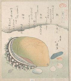 Awabi (Ear-Shell) and Various Shells Totoya Hokkei  (Japanese, 1780–1850)