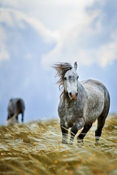 May the spirit of the wild horses blow through your hair. May the thundering of their hooves elevate your heart. May the grace & beauty that is theirs flow all around, and may they be forever free. ~ Unknown