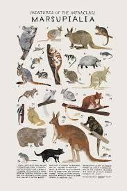 Image result for natural history illustration
