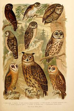 Atlante ornitologico Milano :U. Hoepli,1902. Biodiversitylibrary. Biodivlibrary. BHL. Biodiversity Heritage Library