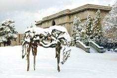 "Deborah Butterfield  ""Wailana"", 1999, American Sculpture  Bronze.  Soon to be re-installed in the Centennial Sculpture Park.  80 in. x 99 in. x 46 in. (203.2 cm x 251.46 cm x 116.84 cm)    Clara and Edwin Strasenburgh Fund,  2000.18"