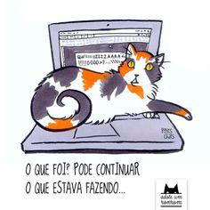 como-diria-gato3