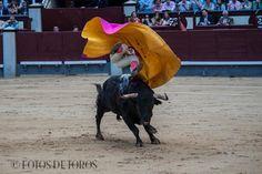 DAVID MORA  http://www.fotosdetoros.es/galeria_cat.php?cat=114
