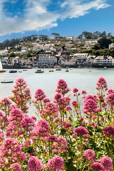 Stunning wild flowers framing the beautiful village of St Mawes, Cornwall.
