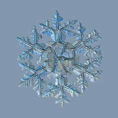 Close-up snowflake picture: Gardener's dream, large stellar dendrite snow crystal with massive arms and big central hexagon, divided by six sectors