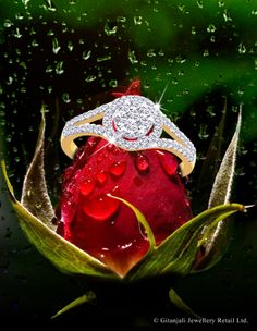 #Gitanjali #Jewels is the largest  most trusted #multi-branded #jewellery retailers in the world, which offers a dazzling bouquet of world's leading Jewellery brands including Asmi, Nakshatra, D'damas, Gili, Diya, Parineeta, Sangini, Nizam, Ananya . All diamond jewellery sold at Gitanjali Jewels is certified by the International Gemological Institute.