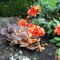 Beautiful fall nature