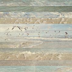 Flying Beach Birds I Bird Canvas, Canvas Art, Wall Art Prints, Framed Prints, Canvas Prints, Dark Forest, Primary Colors, Vintage World Maps, Birds
