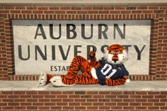 Aubie in front of the Auburn University sign on campus. Football War, Auburn Football, College Football Teams, Auburn Tigers, College Cheer, Clemson, Auburn University, Best University, Auburn Game