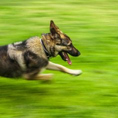Search / 500px Panning Photography, Corgi, Creativity, Action, Search, Animals, Corgis, Group Action, Animales