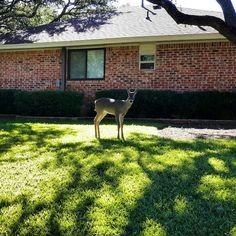 Deer, I see you watching me watching you. Photography Journal, Deer, Reindeer