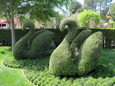 Disneyland: The Happiest Plants on Earth - swan topiaries near of It's A Small World