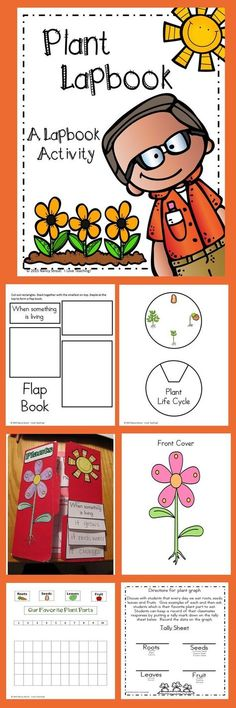 Plants! This lapbook is a great activity to do along with any Plant Unit. This packet includes 33 pages. I have included photos and directions of how to make the lapbook. The lapbook includes a cover, parts of a plant, living and nonliving, graph, vocabulary, life cycle.