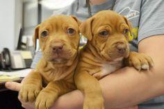 44 Amazing joy images   Animaux, Adoption, Animal control