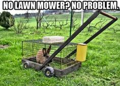 Rabbit mower - for my niece, Rachel. See, there is more you can do with the bunnies than just eat the mean ones now!!
