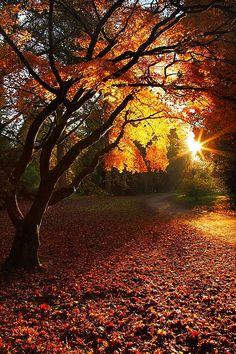 ✯ Autumn Sunrise