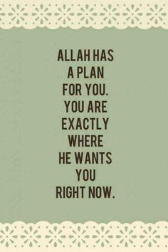 Allah has a plan for you!                                                                                                                                                     More