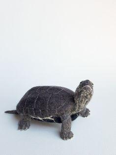 sue hart needle felted turtle