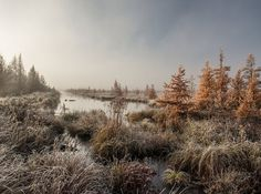 """Adam Dorn- """"Frosted Tamarack Swamp at Dawn"""" Nat'l Geographic photo contest"""