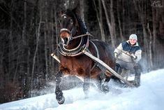 Noriker Power in the snow Winter, Snow, Horses, Animals, Mountains, Winter Time, Animales, Animaux, Animal