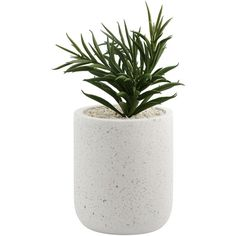 Terrazzo Look Artificial Plant | Kmart ❤ liked on Polyvore featuring home, home decor, floral decor and filler