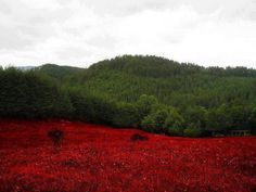 And nature speaks for his country White, green and red flag of Bulgaria