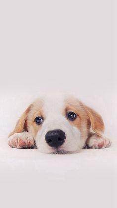 Cute Puppy Dog Pet #iPhone #6 #plus #wallpaper