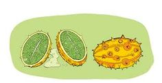 Image result for drawings of a melon