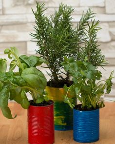 Grow Your Own Herbs At Home With This Life Hack