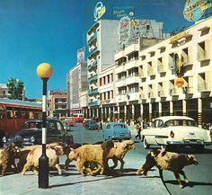 Street with new buildings, Bab Al-Sherjy, Baghdad, c1958شارع مع بنايات جديدة، باب الشرقي، بغداد، ١٩٥٨