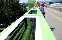 This Amazing Algae Farm Gobbles Up Pollution From the Highway Below it! – Greener Ideal