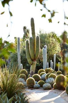 540 best desert landscaping ideas images on pinterest in 2018 landscaping diy landscaping. Black Bedroom Furniture Sets. Home Design Ideas