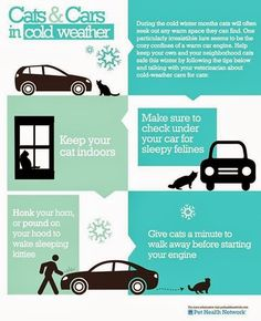 Burr.. it's cold! Check out this infographic for cats & cars in cold weather